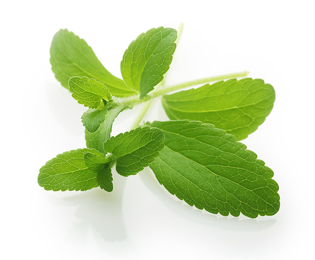 Image: Preclinical study finds stevia is comparable to antibiotics in the treatment of Lyme disease