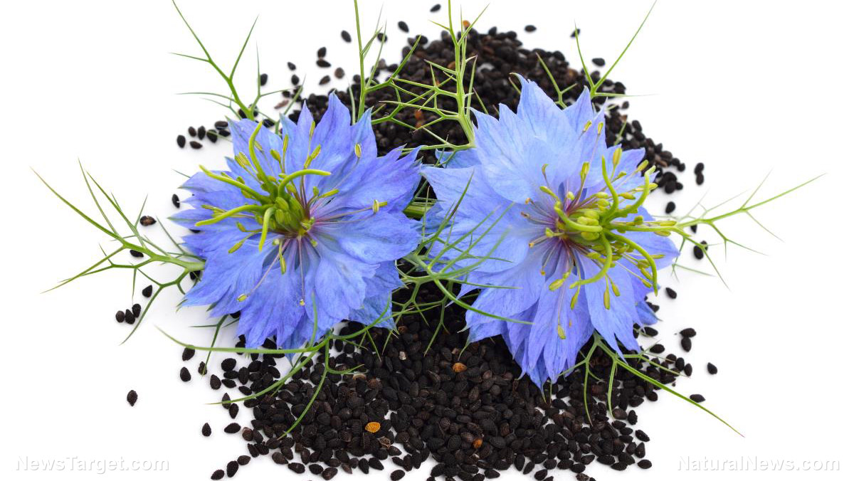 Image: The therapeutic heart benefits of long-term administration of Nigella sativa (black cumin seed)
