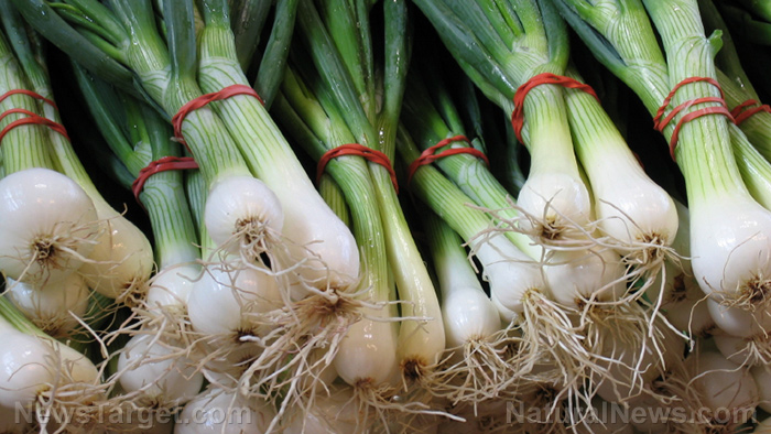 Image: The welsh onion can combat the effects of a high-fat diet