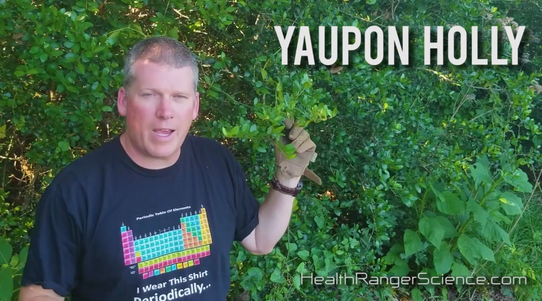 "Image: Health Ranger teaches wild foods: Yaupon Holly for ""coffee"" and Nopal cactus fruit for nutrition"