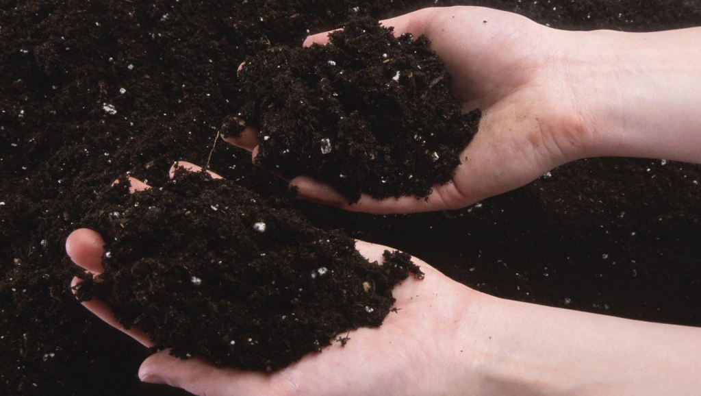 Image: 4 Soil problems and how to fix them