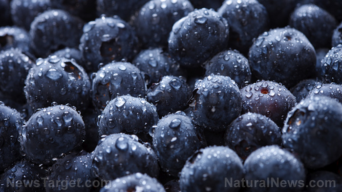Image: Eat more blueberries to protect yourself from bacterial infections