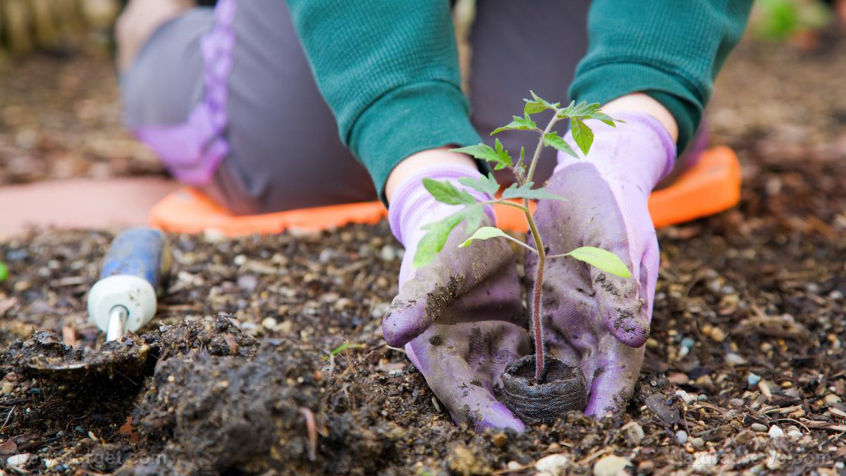 Garden-Spring-Vegetable-Plant-Organic-Work-Person Gardening hacks: High-yield strategies to make the most out of your space beds black plastic climbing plants crops extend the growing extend the growing season garden space growing season leaf lettuce maximize space planting crops plants plastic tunnel pole beans raised beds rich soil rounded bed soil vegetable yield vining crops [your]NEWS