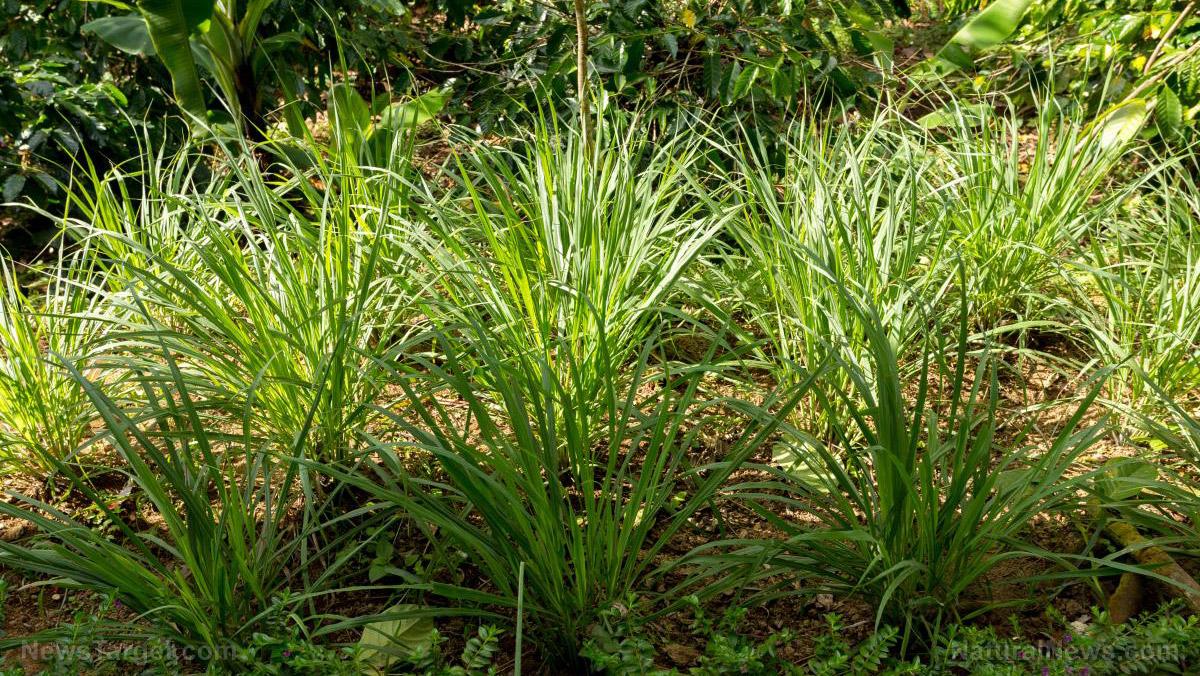 Image: Bye, bye, bugs: 12 plants to keep the bugs away