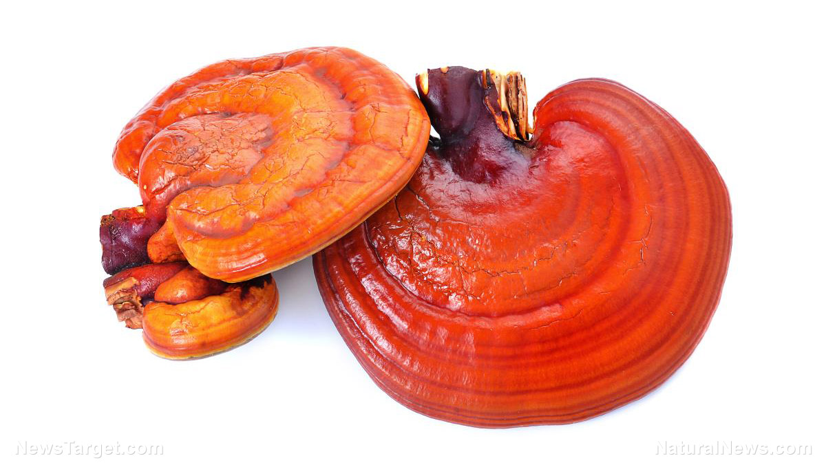 Image: Reishi mushroom and certain microalgae are great ways to enhance your immune system