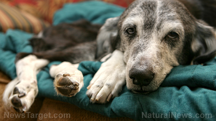 Image: Using homeopathy on animals: Case study of how it saved a disabled dog