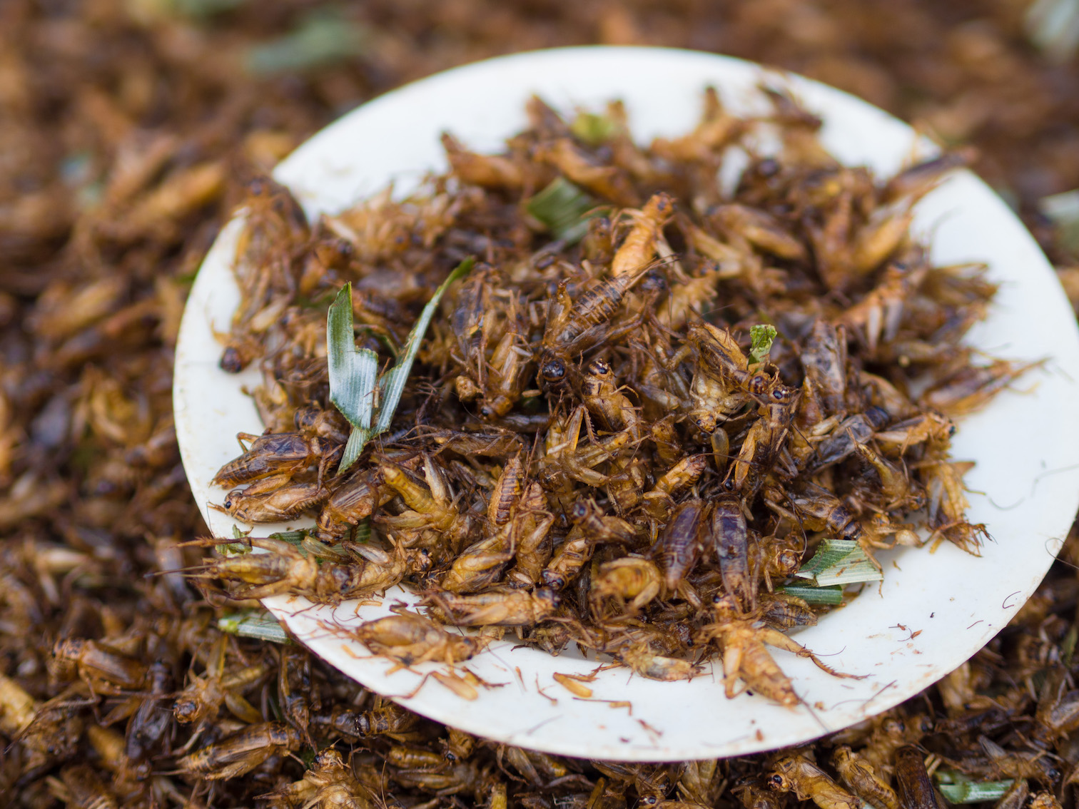 "Image: Academics are trying to ""normalize"" eating insects by baking biscuits out of ground insect powder"