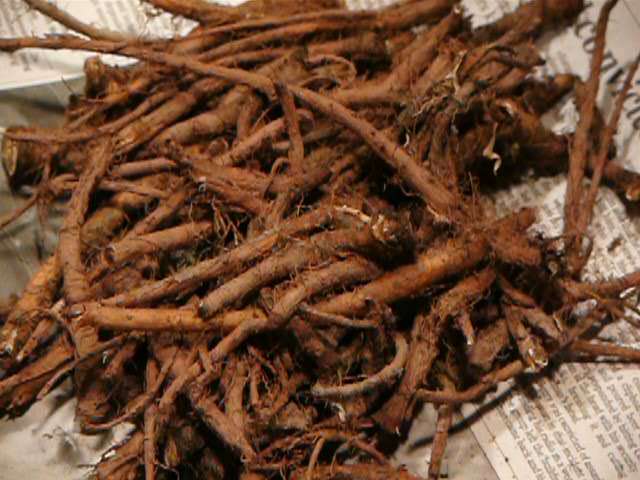 Image: Here's what dandelion roots can do for you: Digestion, blood flow, eyesight and more