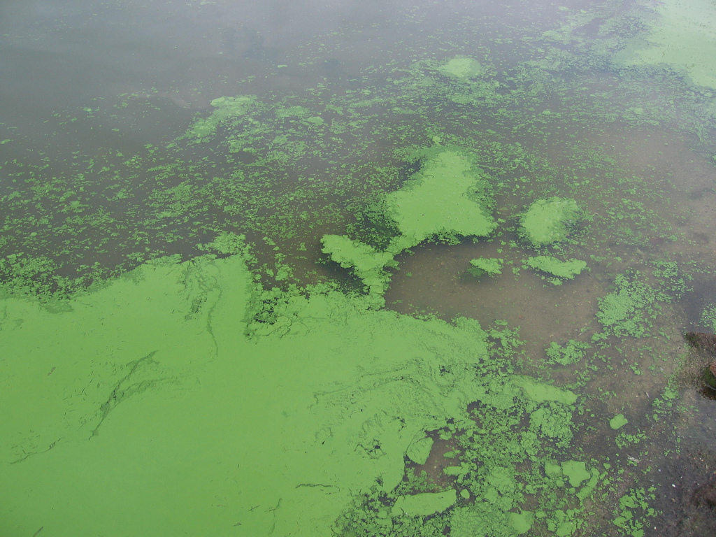 Image: Is Mother Nature fighting back? Chemical cloud that poisoned 200 may have been caused by algal bloom