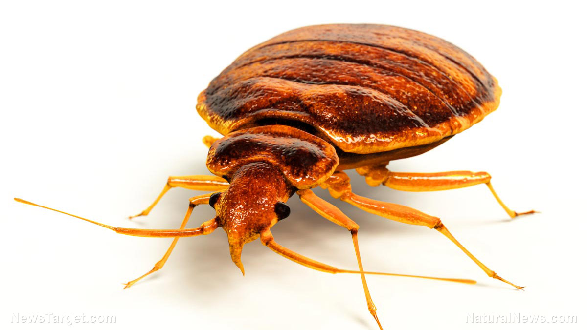 Image: Cleanliness can prevent bugs as well as germs: Bed bugs love dirty laundry, study finds