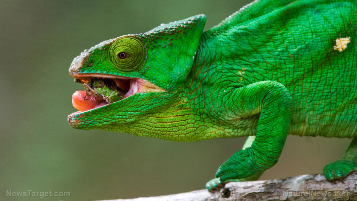 Image: Astounding new material changes color and patterns like a chameleon