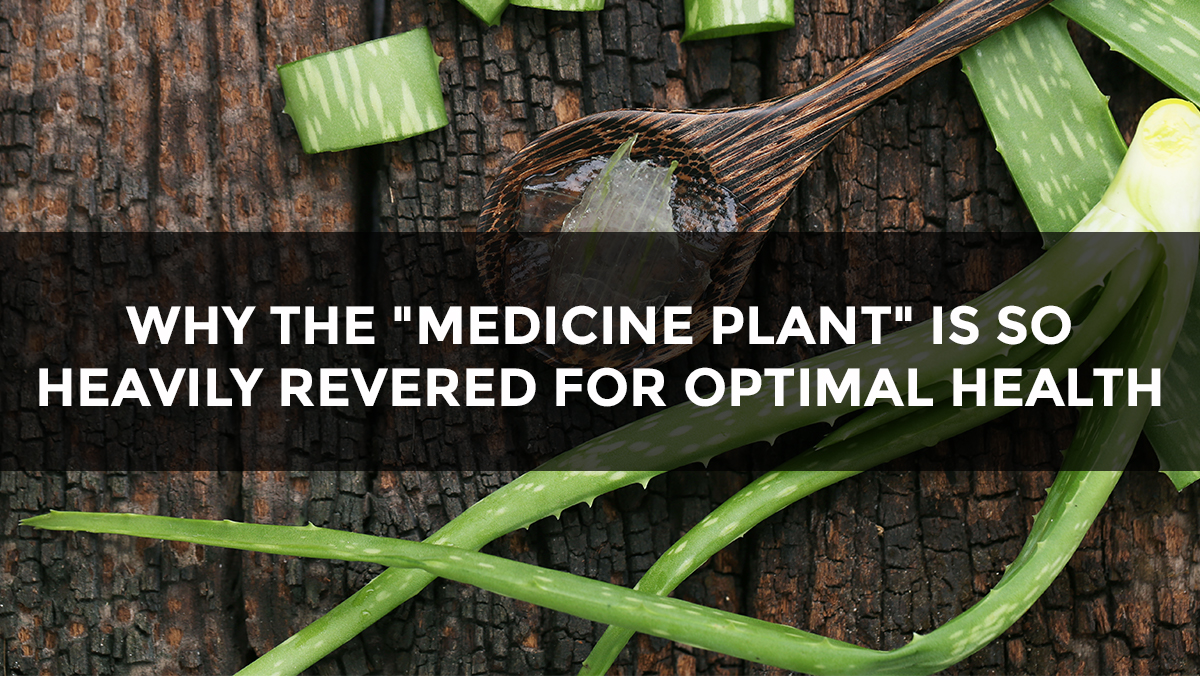 "Image: Why this ""medicine plant"" is so heavily revered for optimal health"