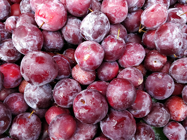 Image: Food as medicine: Phalsa helps diabetics manage their blood sugar levels