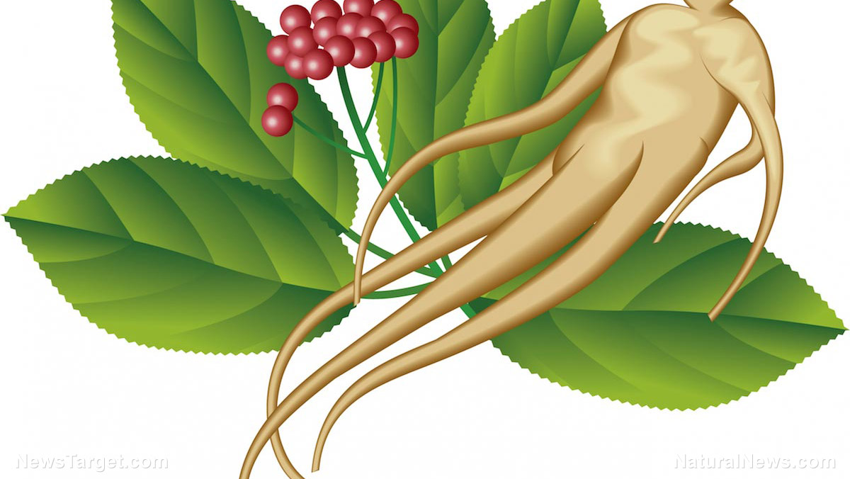 Image: Ginseng extracts found to prevent obesity