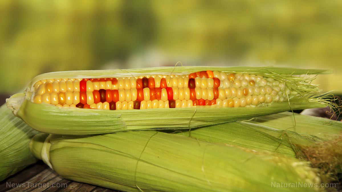 Image: Trump to pump $12 billion in welfare-type aid to U.S. farmers, but do we really need to boost genetically modified soy and corn production?