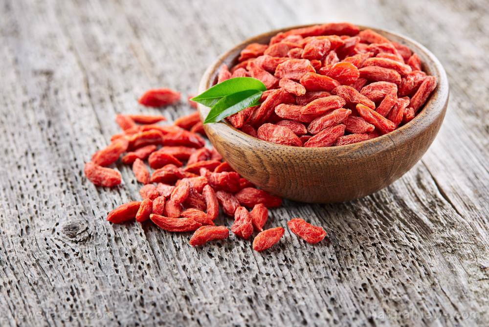 Image: Goji berry extract found to be an effective treatment for two deadly tropical diseases