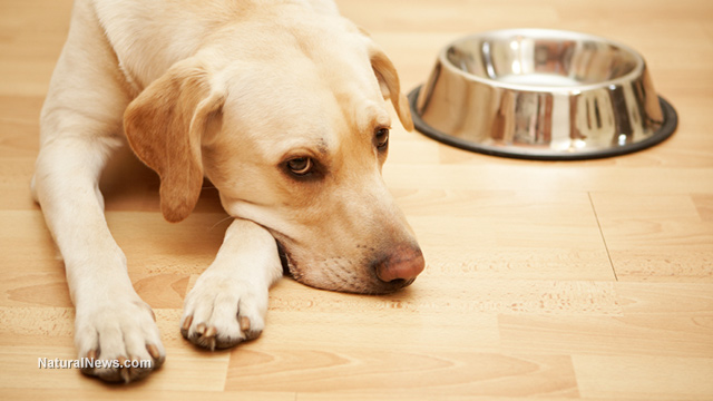 Image: Alert: US dog food recalled after discovered to contain fatal dose of euthanasia drug