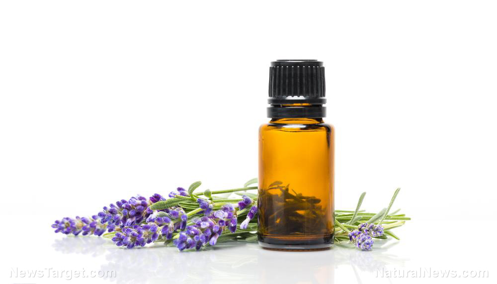 Image: Not just for sleep, lavender oil helps wounds heal faster too