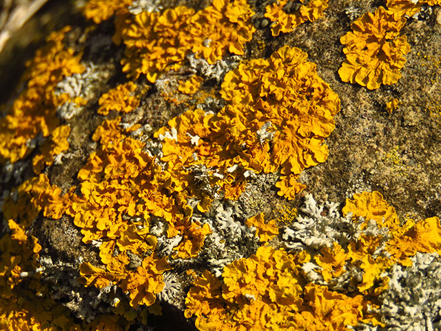 Image: Study: Three common lichen-forming fungi dramatically reduce the risk of breast and cervical cancer