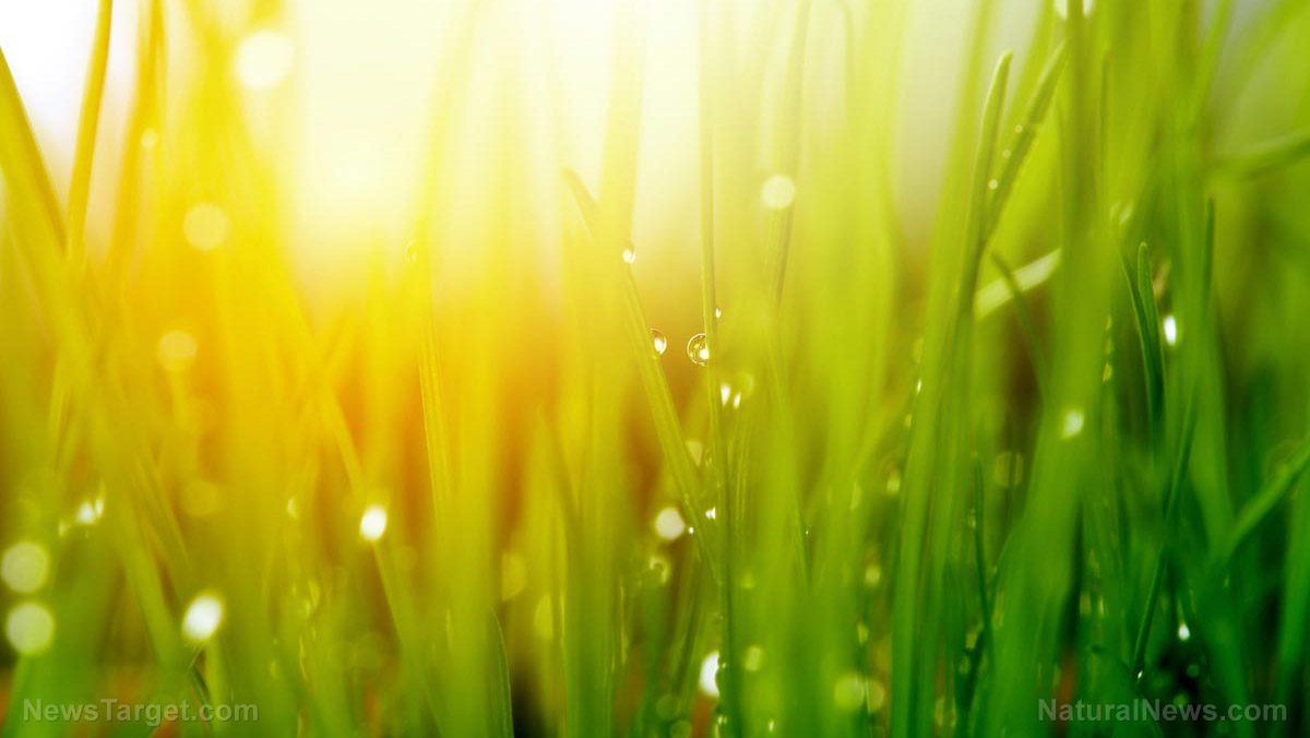 Image: Gardening Tips For Managing Weeds