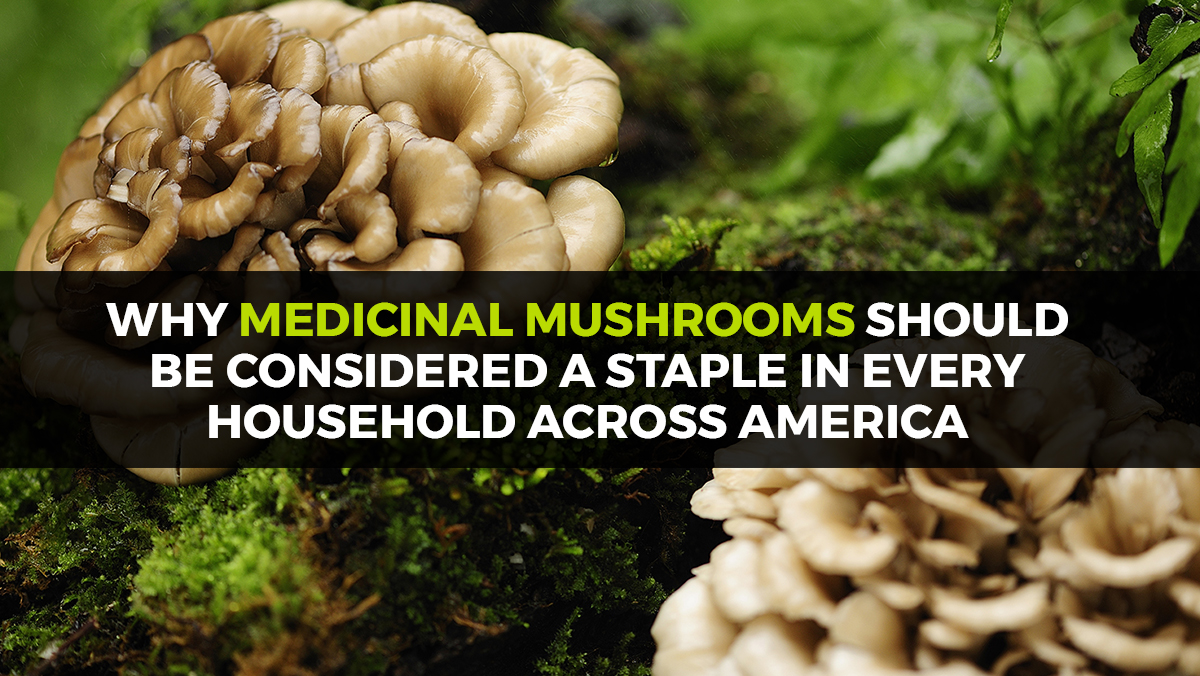 Image: Why medicinal mushrooms should be considered a staple in every household across America