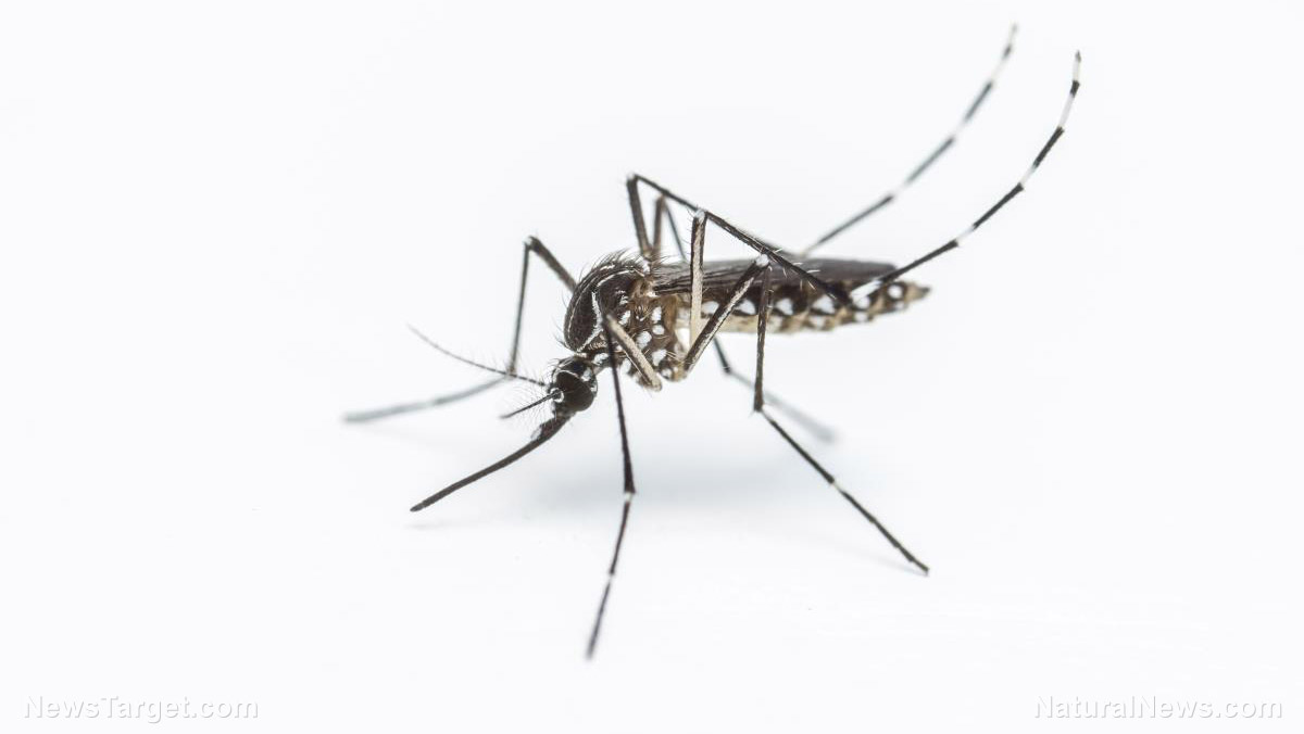 Image: Mosquitoes balance taste with risk: Study finds they can remember your smell, and if you tried to swat them