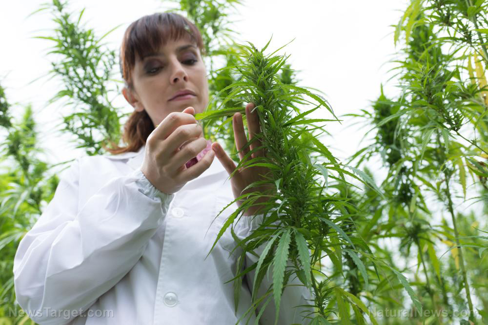 [Image: Cannabis-Hemp-Marijuana-Research-Medical...ihuana.jpg]
