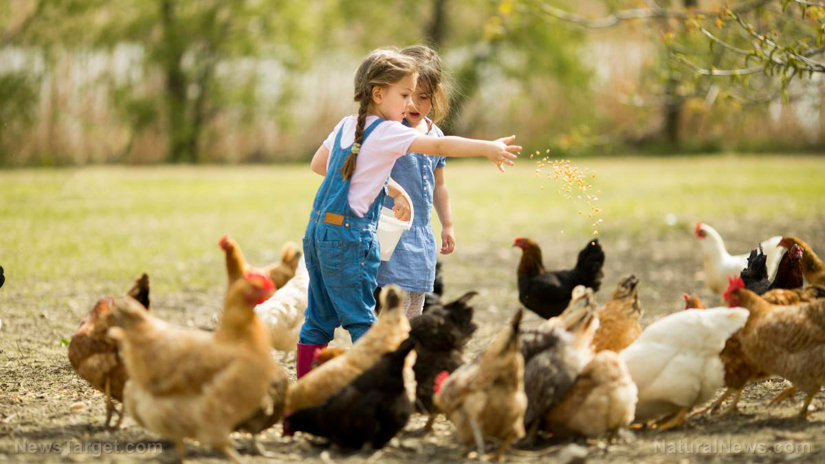 Image: Why farm life is good for kids: Chores, fresh air, sunshine, and a wide range of microbes for a healthy immune system