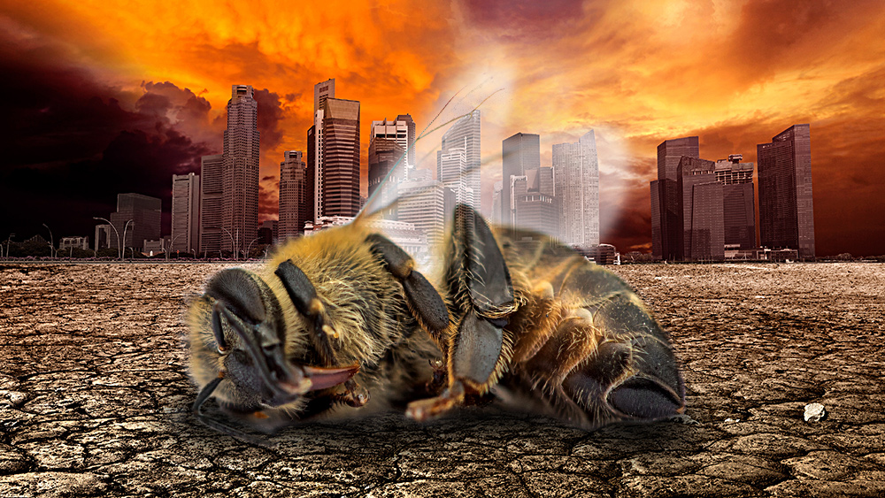 Image: Insect population COLLAPSE a death warning for all humanity