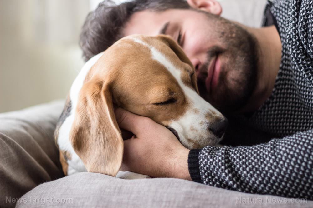 How to keep dogs naturally healthy despite kidney failure