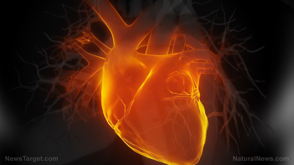 Image: New study reveals the vital role vitamin K2 plays in heart health