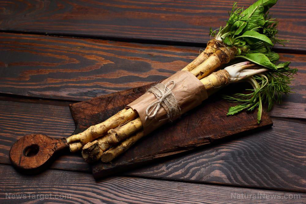 Image: Horseradish treats a variety of health conditions, from asthma to toothache to gout pain