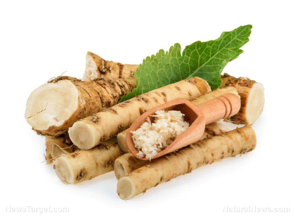 Image: Horseradish contains 10x more glucosinolate than broccoli, making it a potent cancer-fighting superfood