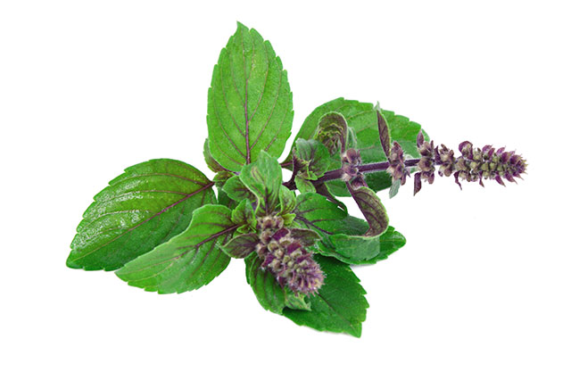 Image: Tulsi may be the ultimate adaptogen for everyday use