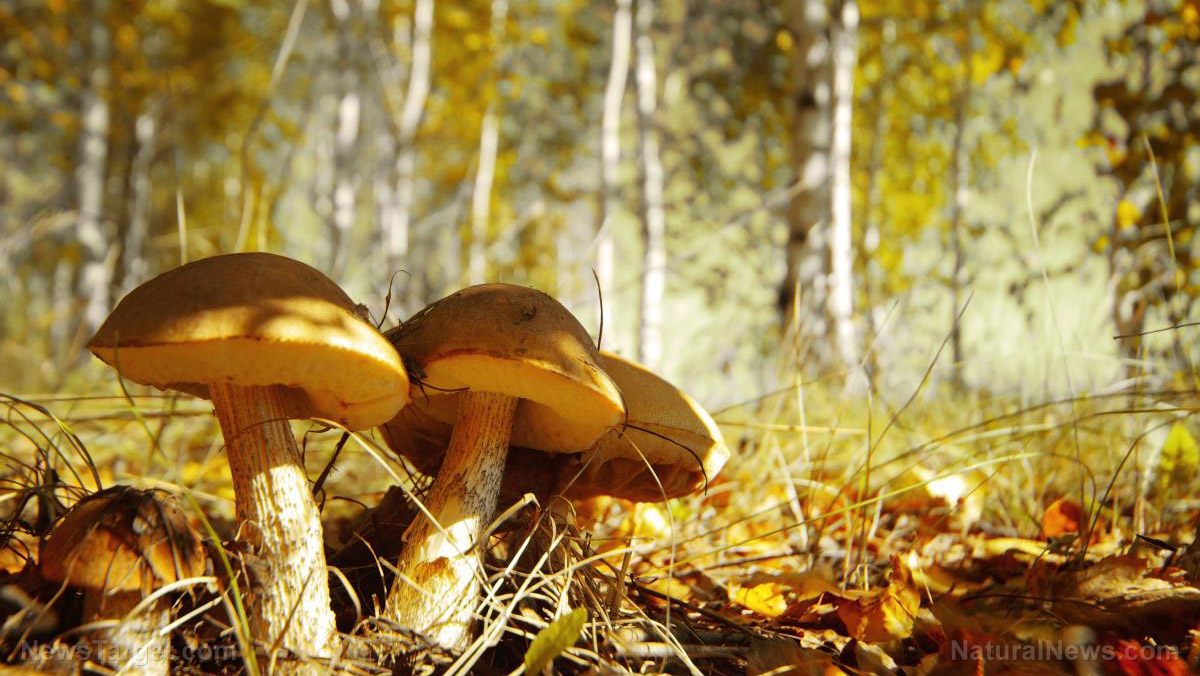 Image: Belarusian mushrooms found to be contaminated with radioactive cesium