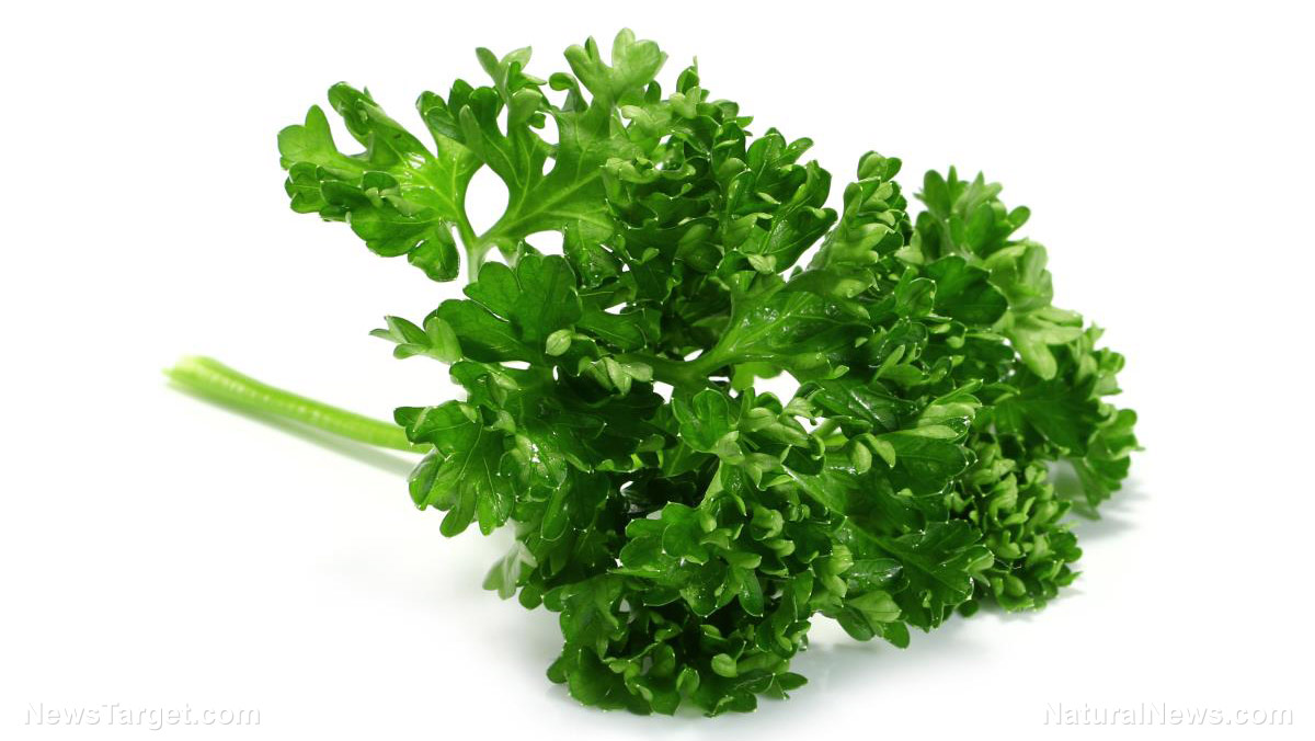 Image: The unassuming parsley has many healing properties, including the ability to fight cancer