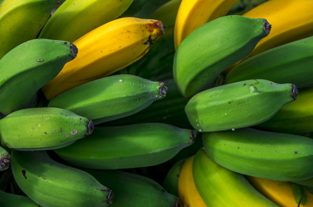 Image: Stem juice from bananas a potential natural cure for diabetes