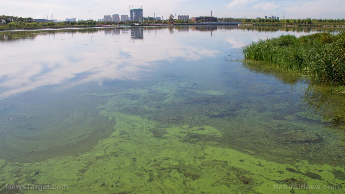 Image: Toxic algae problem becoming a risk to human health and the economy, experts warn
