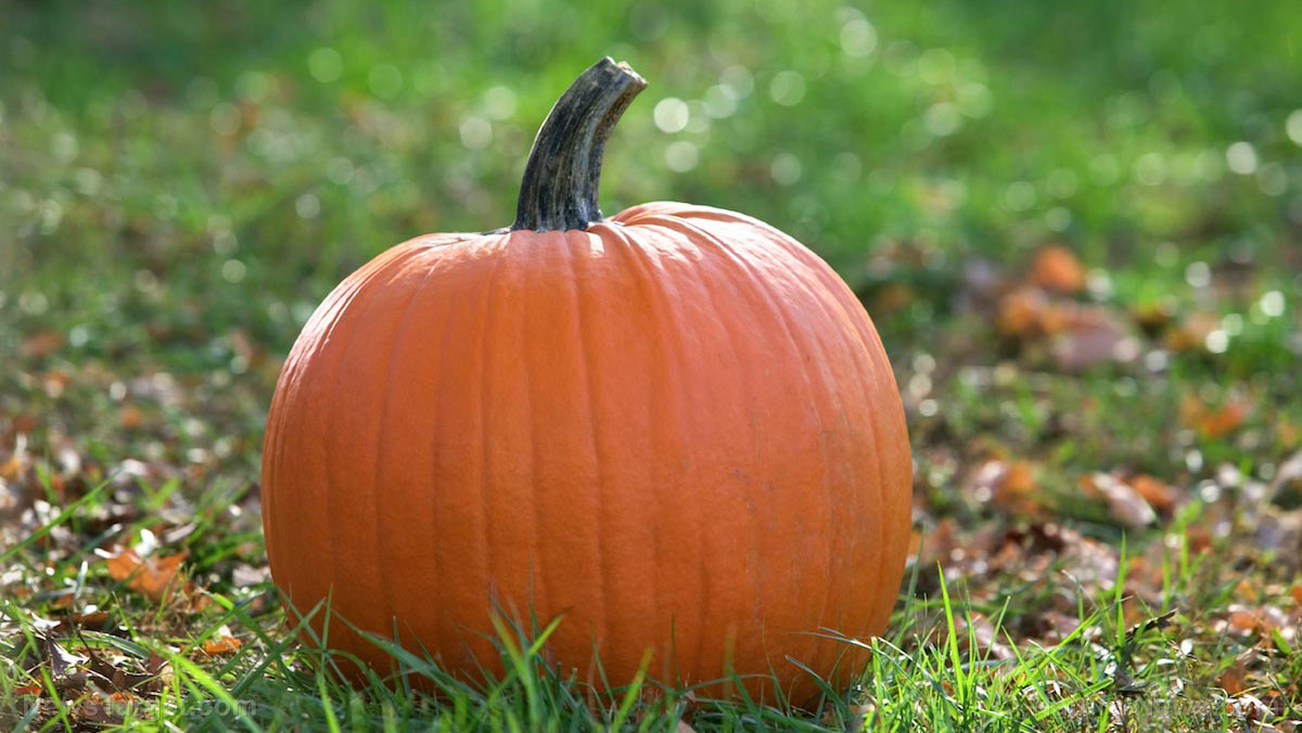Image: Pumpkins are a natural and delicious way to keep your heart strong if you're obese