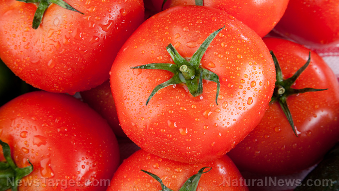 Image: Tomato wastes show potential value as animal feed as they still possess a high nutritional content