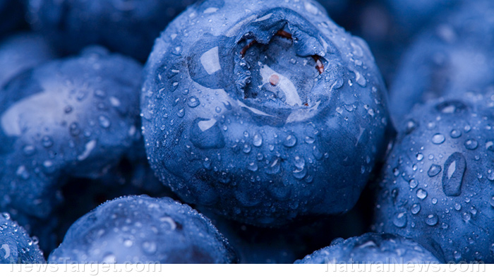 Image: Blueberries contain a specific substance that can prolong your life
