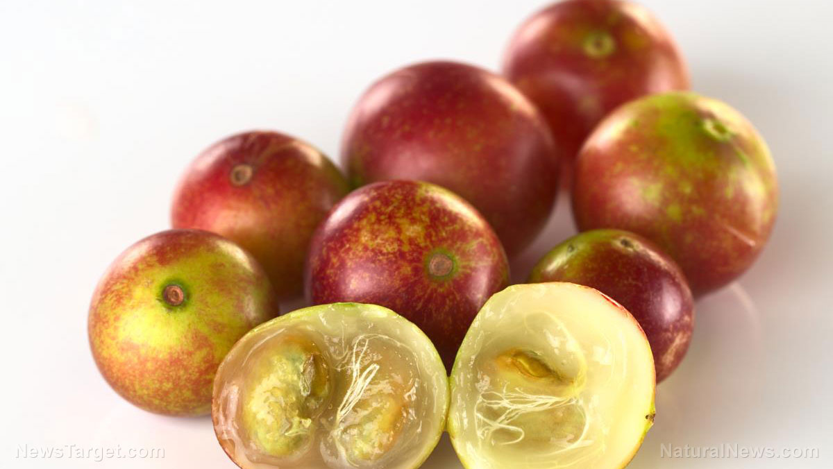 Image: Camu camu found to speed up metabolism and reduce weight gain