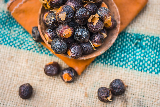 Image: Why the Indian soapberry is catching the attention of many natural healers