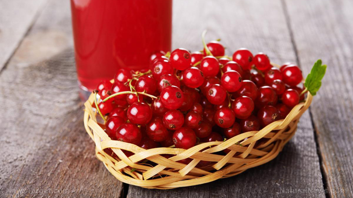 Image: Cranberries prevent cancer and many other chronic diseases
