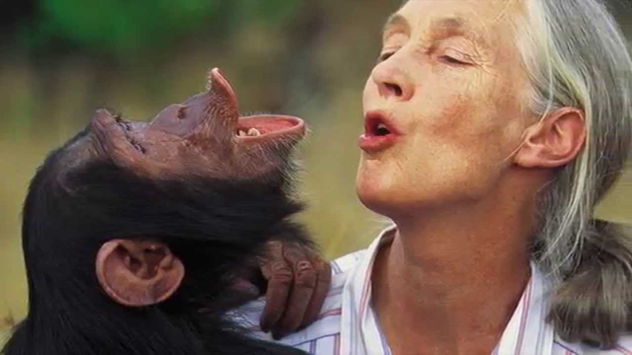 Image: GMO food and fraudulent industry 'science' condemned by world-famous scientist Jane Goodall