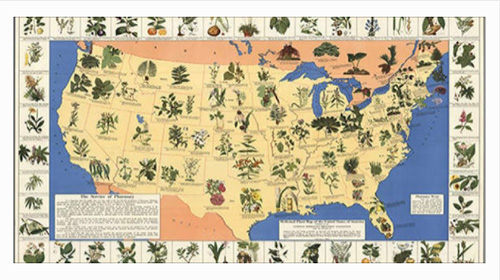 Image: What grows where? A medicinal plant map for your survival kit