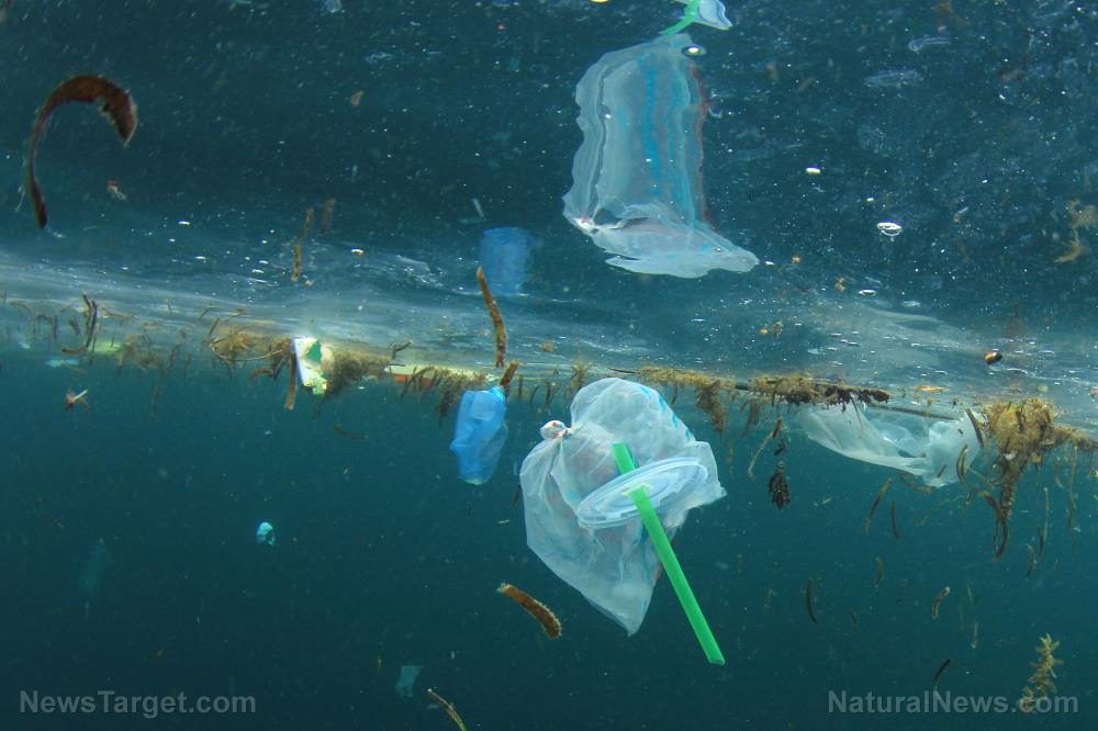 Image: All our bodies are filled with plastic