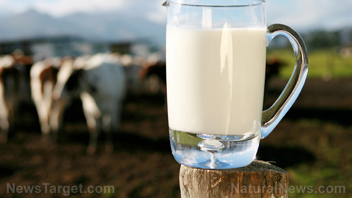Image: Babies are less likely to develop a milk allergy when they drink milk from cows fed a natural diet