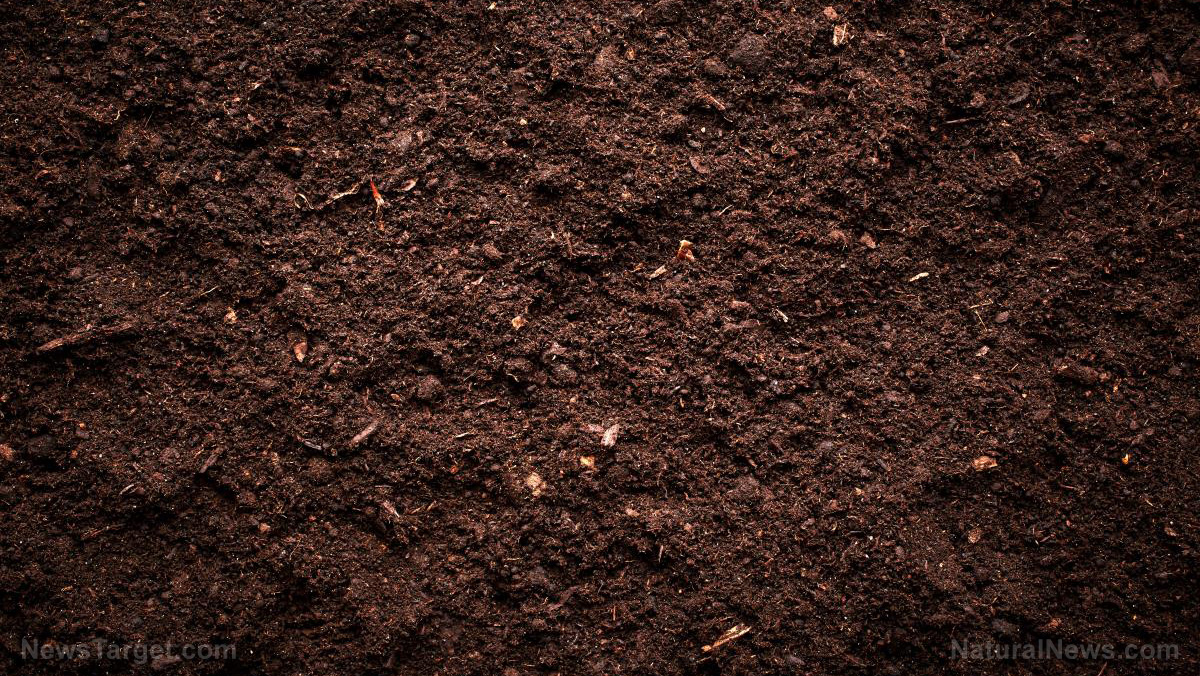 Image: Soils treated with organic fertilizer are healthier; produce stronger plants