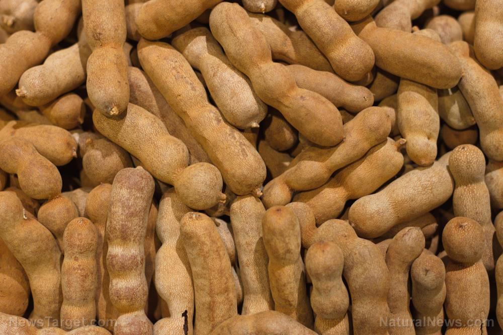 Image: Tamarind, a tropical fruit used in traditional medicine, found to kill drug-resistant bacteria